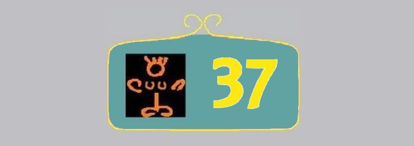 Pointure 37